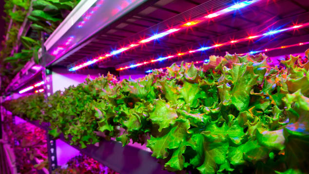 WORLD'S LARGEST VERTICAL FARM' TO FEED MIDDLE EAST'S HIGH-FLIERS