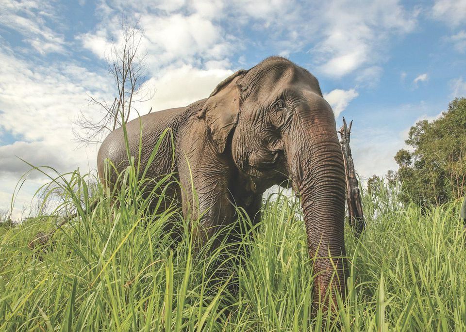 Ethical Elephant Tourism: Do It For Dumbo