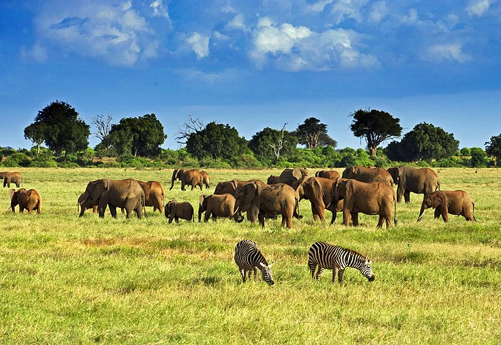 7 Top Tourist Attractions In Kenya