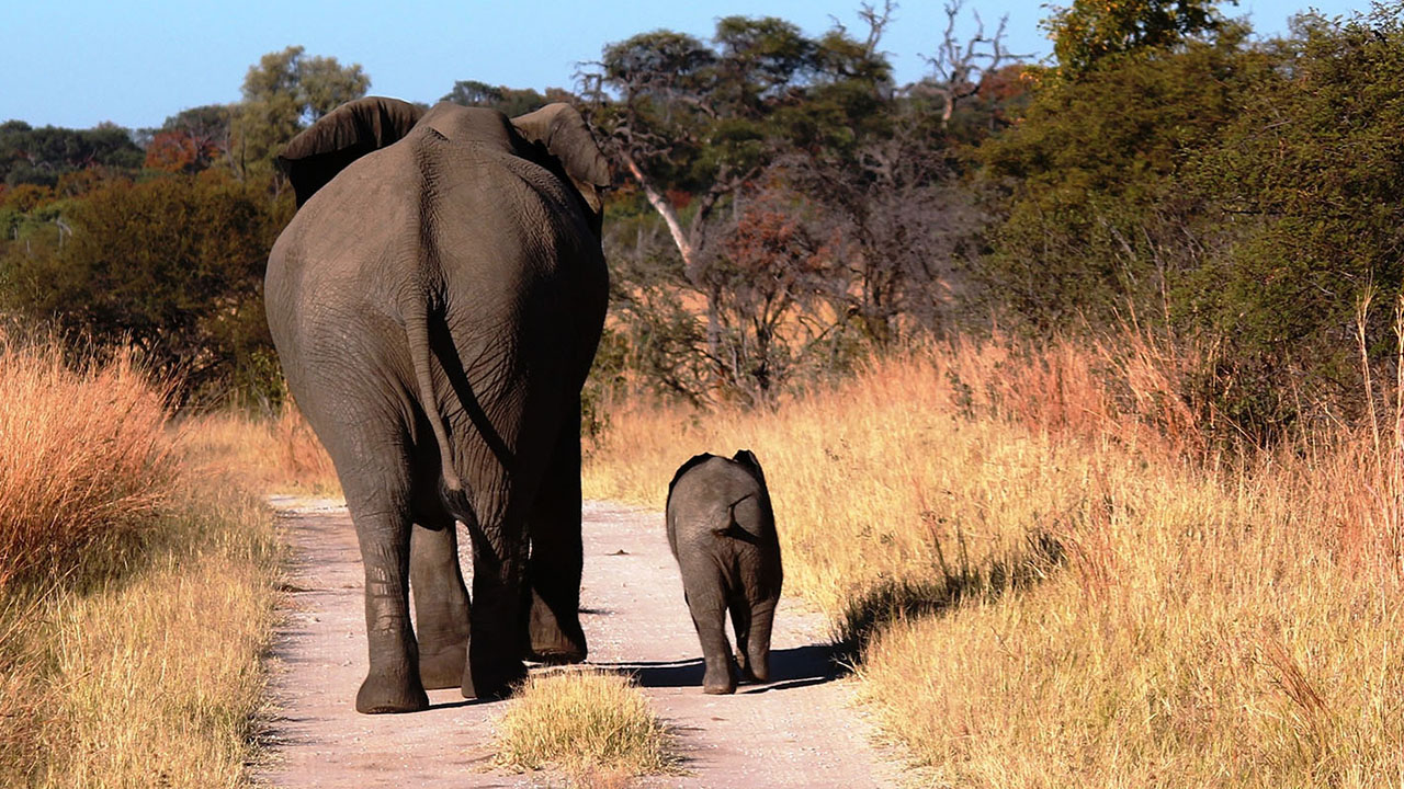 Top 10 Reasons To Visit Hwange National Park