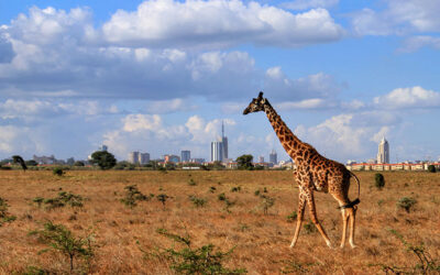 Easter in Nairobi – 02nd – 08th Apr, 2021